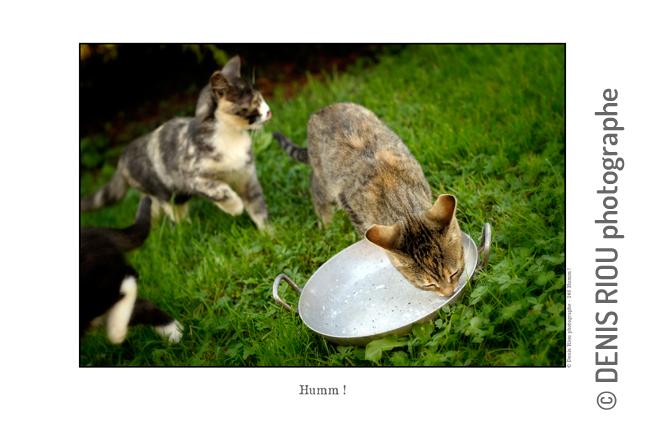 Humm ! 246 © Denis Riou Photographe